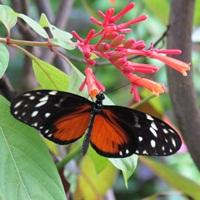 nastroje motyl dianapozytywnie